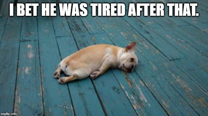 tired dog | I BET HE WAS TIRED AFTER THAT. | image tagged in tired dog | made w/ Imgflip meme maker