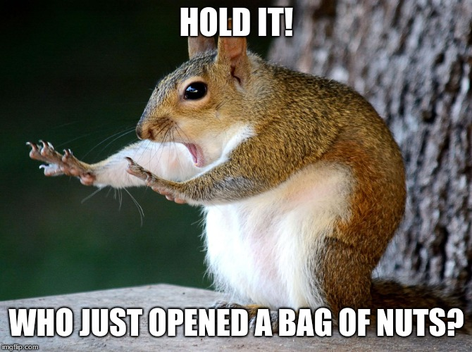 HOLD IT! WHO JUST OPENED A BAG OF NUTS? | image tagged in squirll | made w/ Imgflip meme maker