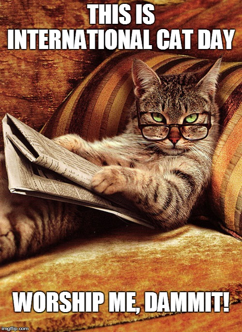 it's I.C.D. | THIS IS INTERNATIONAL CAT DAY WORSHIP ME, DAMMIT! | image tagged in funny | made w/ Imgflip meme maker
