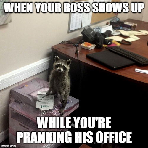 WHEN YOUR BOSS SHOWS UP WHILE YOU'RE PRANKING HIS OFFICE | image tagged in raccoon in the office | made w/ Imgflip meme maker