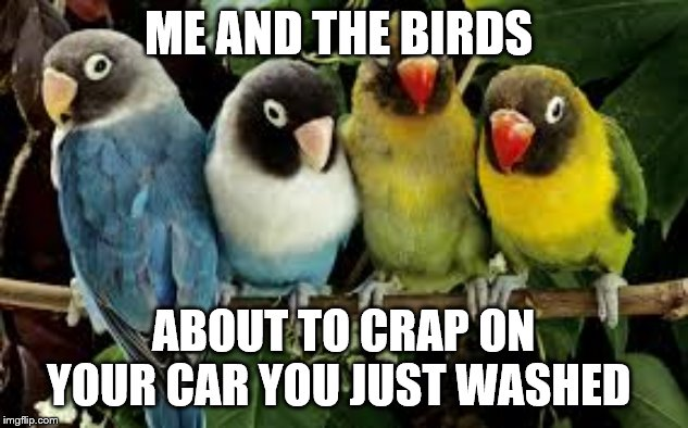 me and the birds | ME AND THE BIRDS ABOUT TO CRAP ON YOUR CAR YOU JUST WASHED | image tagged in crappy birds | made w/ Imgflip meme maker