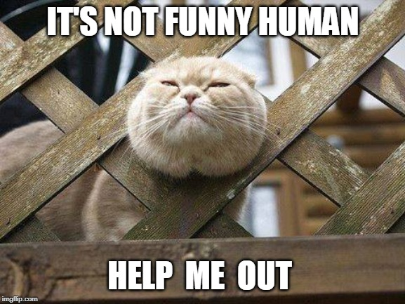 DONT TAKE A PIC | IT'S NOT FUNNY HUMAN HELP  ME  OUT | image tagged in cats,cat,funny,memes | made w/ Imgflip meme maker