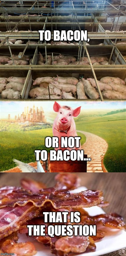 Poor Babe..XD | TO BACON, OR NOT TO BACON... THAT IS THE QUESTION | image tagged in pigs,babe,bacon,swine,slaughter,memes | made w/ Imgflip meme maker