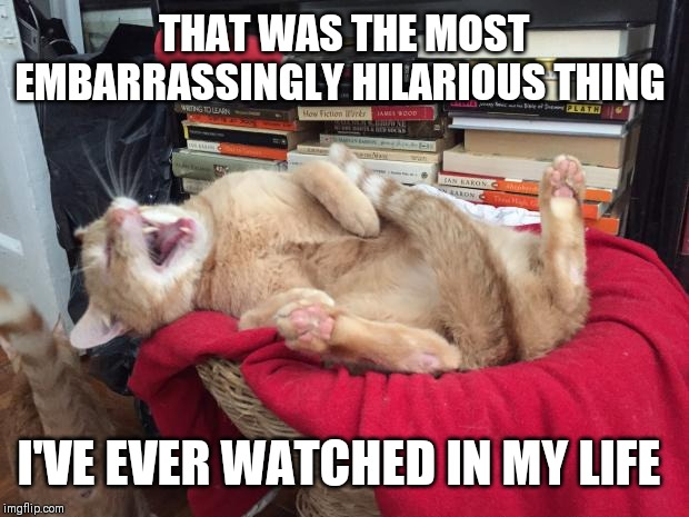 Cat Laughs | THAT WAS THE MOST EMBARRASSINGLY HILARIOUS THING I'VE EVER WATCHED IN MY LIFE | image tagged in cat laughs | made w/ Imgflip meme maker