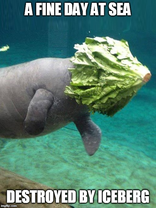 Lettuce Pray |  A FINE DAY AT SEA; DESTROYED BY ICEBERG | image tagged in memes,titanic,iceberg,lettuce,manatee,ocean | made w/ Imgflip meme maker