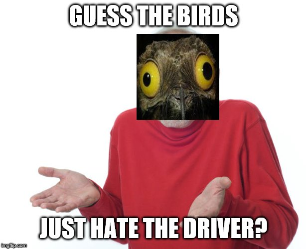 Guess i'll die | GUESS THE BIRDS JUST HATE THE DRIVER? | image tagged in guess ill die | made w/ Imgflip meme maker