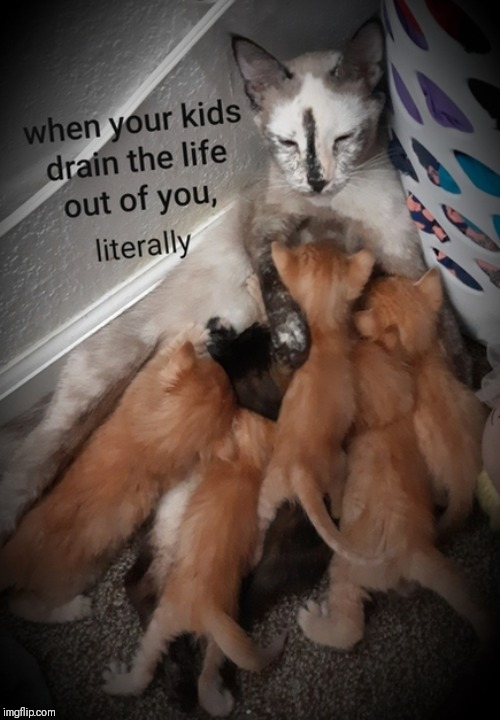 image tagged in funny memes,cats,life,kids,sucks | made w/ Imgflip meme maker