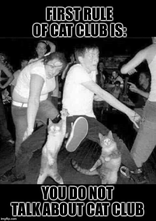 Cat Club | FIRST RULE OF CAT CLUB IS: YOU DO NOT TALK ABOUT CAT CLUB | image tagged in cat,dance,club,fight club,funny memes | made w/ Imgflip meme maker