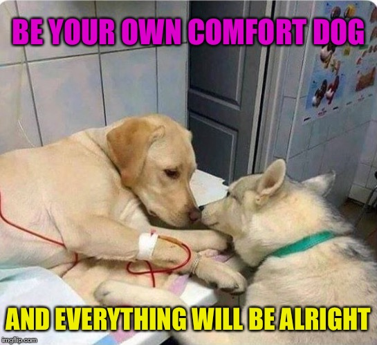 Be your own best friend | BE YOUR OWN COMFORT DOG AND EVERYTHING WILL BE ALRIGHT | image tagged in comfort,dogs,positive thinking,positive,memes | made w/ Imgflip meme maker