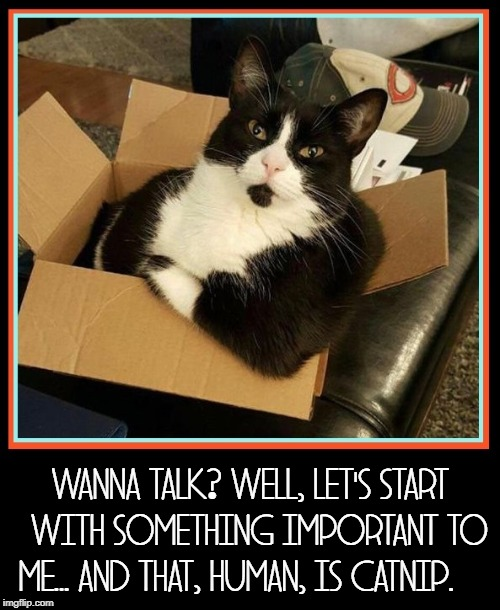 I've been meaning to talk to you for awhile, now |  WANNA TALK? WELL, LET'S START   WITH SOMETHING IMPORTANT TO ME... AND THAT, HUMAN, IS CATNIP. | image tagged in vince vance,cats,catnip,sophisticated cat,cat in a box,talking with your cat | made w/ Imgflip meme maker