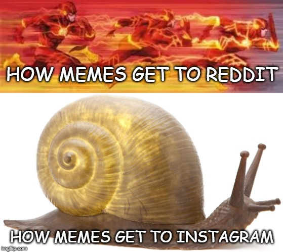 HOW MEMES GET TO REDDIT HOW MEMES GET TO INSTAGRAM | image tagged in snail,flash | made w/ Imgflip meme maker