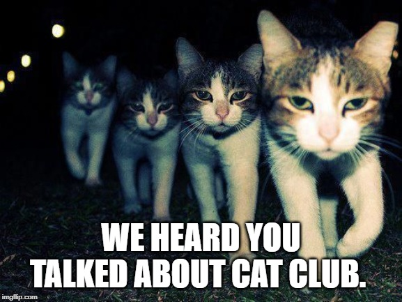 wrong neighborhood cats | WE HEARD YOU TALKED ABOUT CAT CLUB. | image tagged in wrong neighborhood cats | made w/ Imgflip meme maker