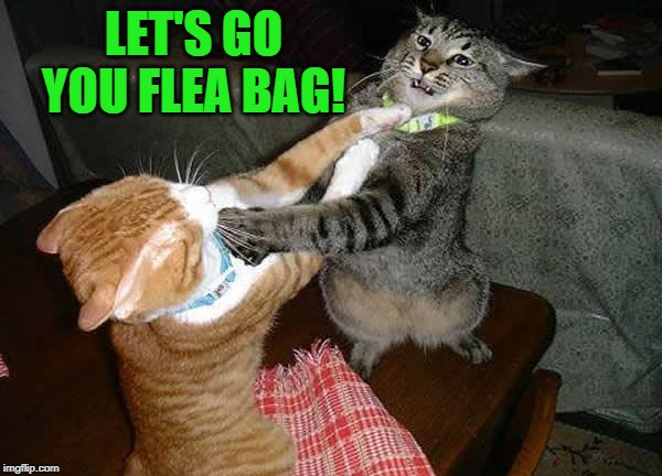 Two cats fighting for real | LET'S GO YOU FLEA BAG! | image tagged in two cats fighting for real | made w/ Imgflip meme maker