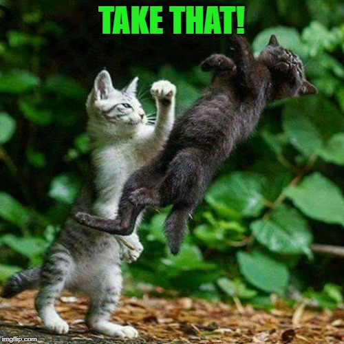 Cat Fight | TAKE THAT! | image tagged in cat fight | made w/ Imgflip meme maker