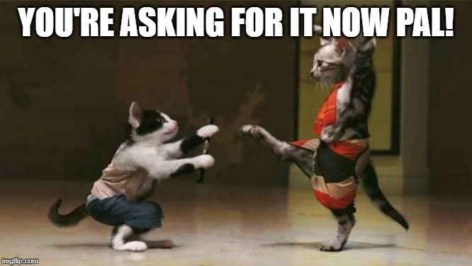 Cat fight | YOU'RE ASKING FOR IT NOW PAL! | image tagged in cat fight | made w/ Imgflip meme maker