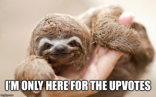 What did the sloth say? | I'M ONLY HERE FOR THE UPVOTES | image tagged in memes,baby sloth | made w/ Imgflip meme maker