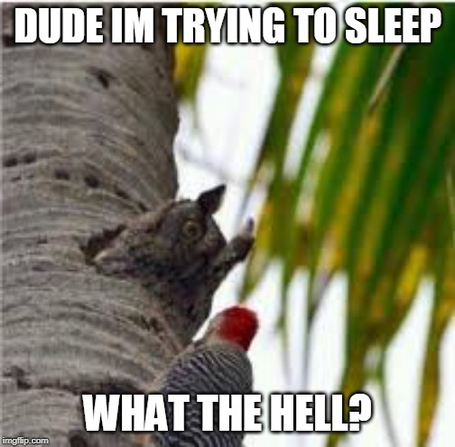 MY TREE |  DUDE IM TRYING TO SLEEP; WHAT THE HELL? | image tagged in owl,birds,funny,memes | made w/ Imgflip meme maker