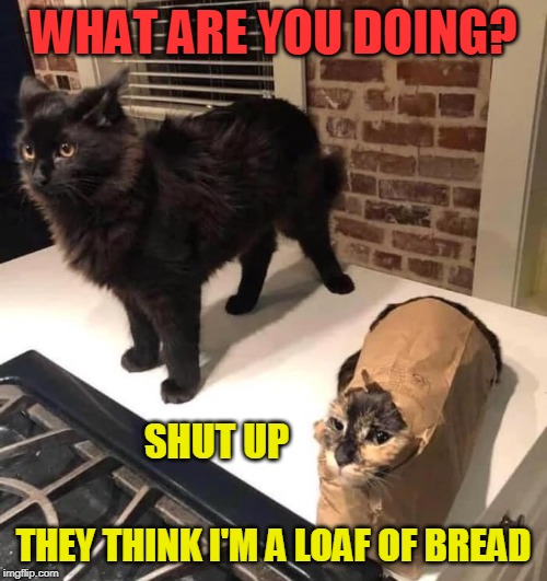 CATBAG | WHAT ARE YOU DOING? THEY THINK I'M A LOAF OF BREAD SHUT UP | image tagged in cats,cat,funny,memes | made w/ Imgflip meme maker