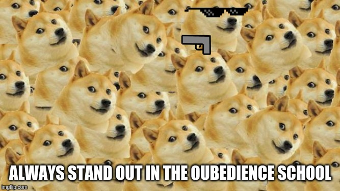 Multi Doge | ALWAYS STAND OUT IN THE OUBEDIENCE SCHOOL | image tagged in memes,multi doge | made w/ Imgflip meme maker