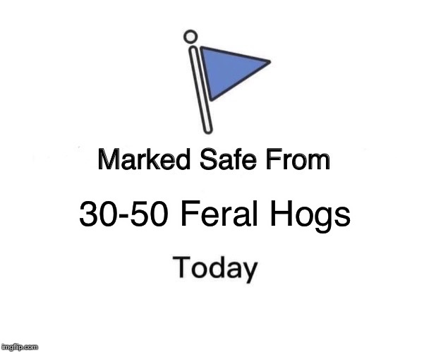 Marked Safe From Meme | 30-50 Feral Hogs | image tagged in memes,marked safe from | made w/ Imgflip meme maker