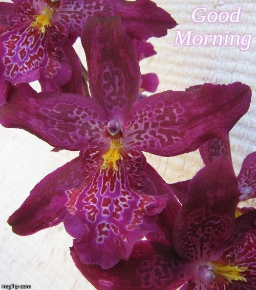 Good morning - Imgflip