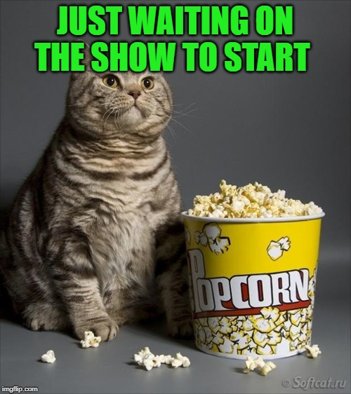 Cat eating popcorn | JUST WAITING ON THE SHOW TO START | image tagged in cat eating popcorn | made w/ Imgflip meme maker
