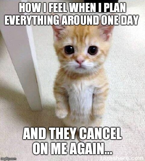 Cute Cat Meme | HOW I FEEL WHEN I PLAN EVERYTHING AROUND ONE DAY AND THEY CANCEL ON ME AGAIN... | image tagged in memes,cute cat | made w/ Imgflip meme maker
