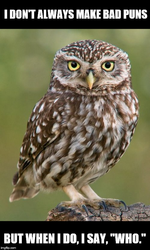"The Most Interesting Little Owl in the World | I DON'T ALWAYS MAKE BAD PUNS BUT WHEN I DO, I SAY, ""WHO."" 