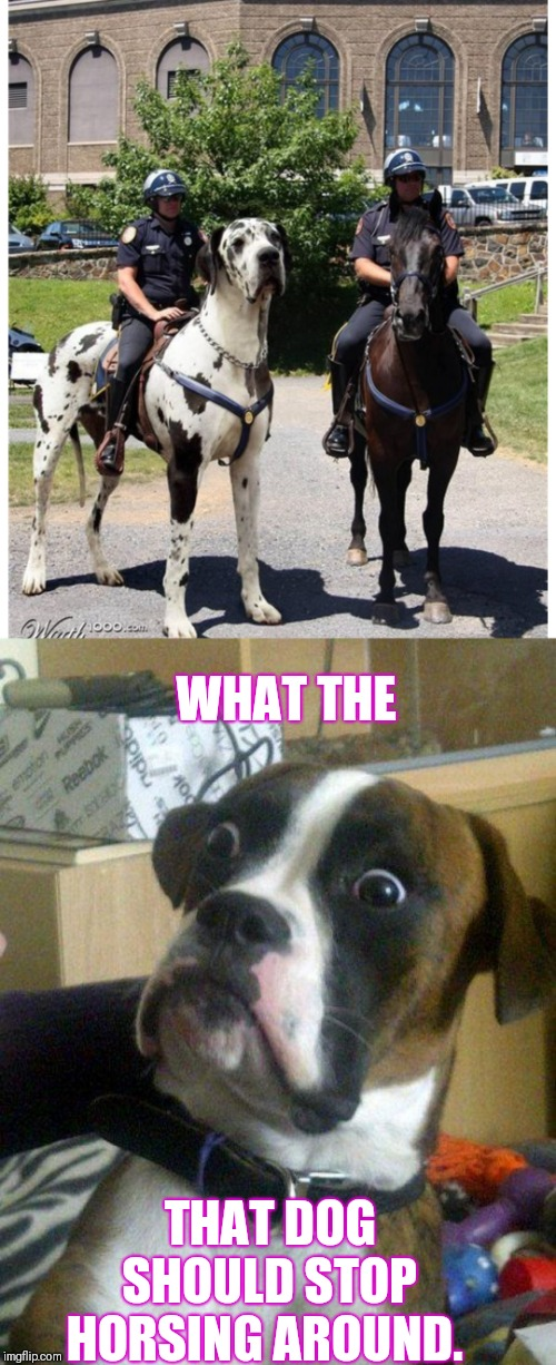 I know you said your dog was big but | WHAT THE THAT DOG SHOULD STOP HORSING AROUND. | image tagged in blankie the shocked dog,just horsing around | made w/ Imgflip meme maker