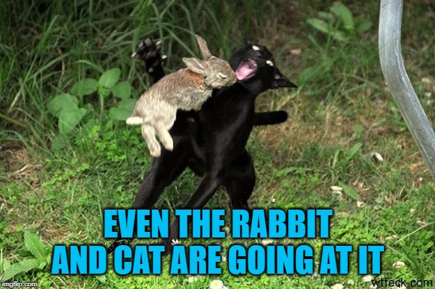 EVEN THE RABBIT AND CAT ARE GOING AT IT | made w/ Imgflip meme maker