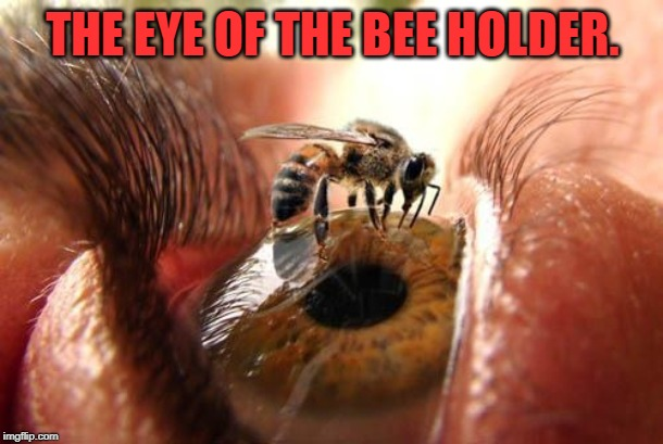 THE EYE OF THE BEE HOLDER. | made w/ Imgflip meme maker