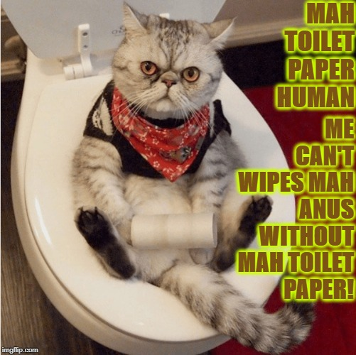 TOILET PAPER | MAH TOILET PAPER HUMAN ME CAN'T WIPES MAH ANUS WITHOUT MAH TOILET PAPER! | image tagged in toilet paper | made w/ Imgflip meme maker