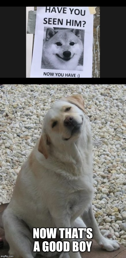NOW THAT'S A GOOD BOY | image tagged in good boy | made w/ Imgflip meme maker