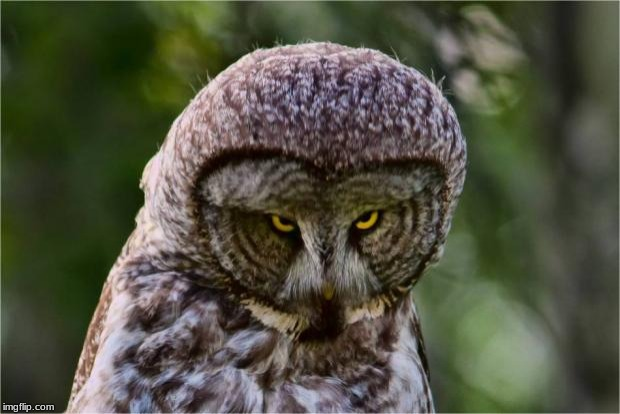 Seriously Owl | image tagged in seriously owl | made w/ Imgflip meme maker