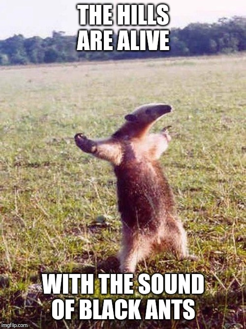 Fight me anteater | THE HILLS ARE ALIVE WITH THE SOUND OF BLACK ANTS | image tagged in fight me anteater | made w/ Imgflip meme maker