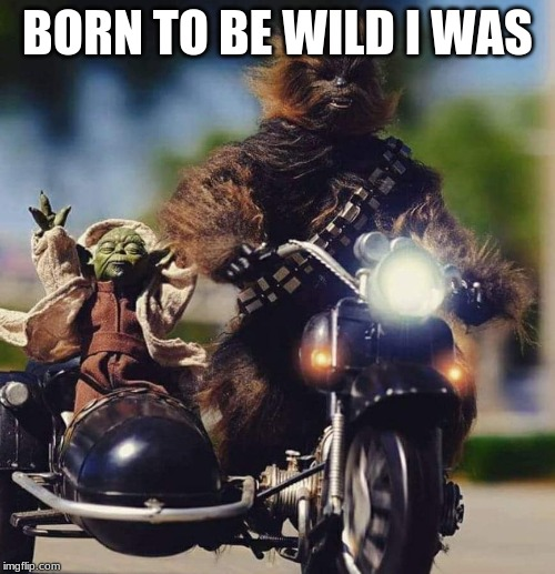 BORN TO BE WILD I WAS | image tagged in yoda  chewy | made w/ Imgflip meme maker