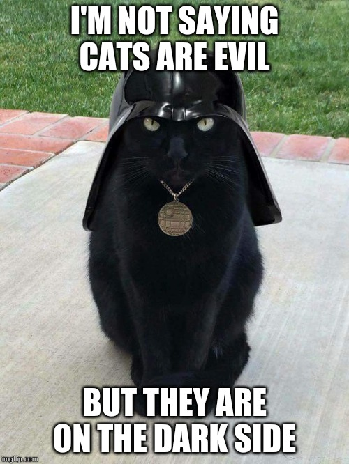 I'M NOT SAYING CATS ARE EVIL BUT THEY ARE ON THE DARK SIDE | image tagged in dark cat | made w/ Imgflip meme maker