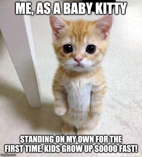 Ginger the standing up baby kitty | ME, AS A BABY KITTY STANDING ON MY OWN FOR THE FIRST TIME. KIDS GROW UP SOOOO FAST! | image tagged in memes,cute cat | made w/ Imgflip meme maker