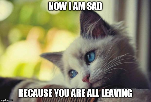 Sad Kitty | NOW I AM SAD BECAUSE YOU ARE ALL LEAVING | image tagged in sad kitty | made w/ Imgflip meme maker