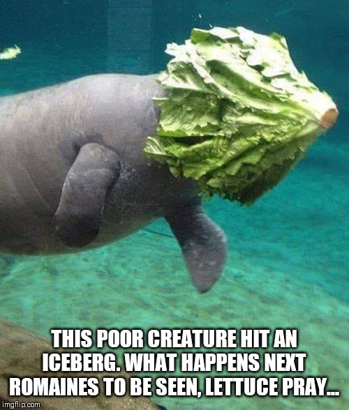 THIS POOR CREATURE HIT AN ICEBERG. WHAT HAPPENS NEXT ROMAINES TO BE SEEN, LETTUCE PRAY... | image tagged in iceberg,joke | made w/ Imgflip meme maker