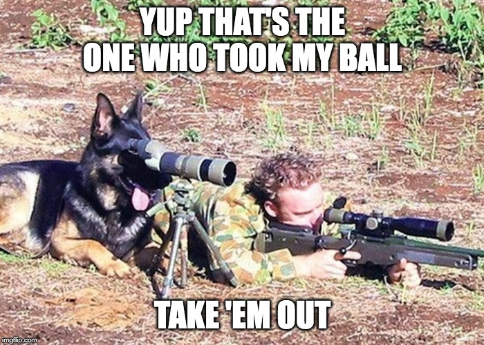 Dog spotter on sniper team | YUP THAT'S THE ONE WHO TOOK MY BALL TAKE 'EM OUT | image tagged in dog spotter on sniper team | made w/ Imgflip meme maker