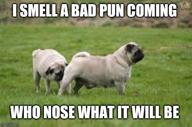 Dog Sniff | I SMELL A BAD PUN COMING WHO NOSE WHAT IT WILL BE | image tagged in dog sniff | made w/ Imgflip meme maker