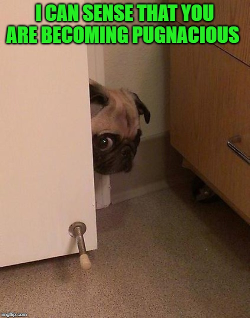 Guilty Pug | I CAN SENSE THAT YOU ARE BECOMING PUGNACIOUS | image tagged in guilty pug | made w/ Imgflip meme maker