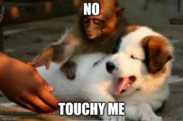 NO TOUCHY ME | image tagged in no touching | made w/ Imgflip meme maker