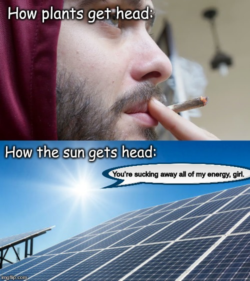 Does this meme work? | How plants get head: How the sun gets head: You're sucking away all of my energy, girl. | image tagged in memes,pornhub | made w/ Imgflip meme maker