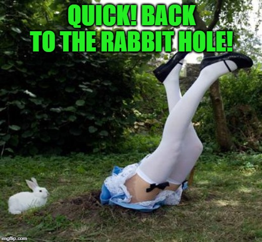 Rabbit Hole | QUICK! BACK TO THE RABBIT HOLE! | image tagged in rabbit hole | made w/ Imgflip meme maker