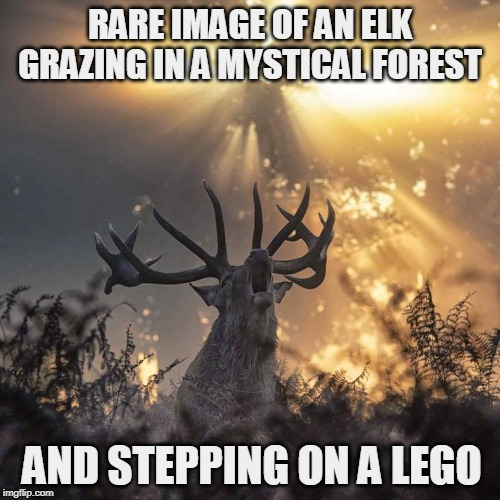 RARE IMAGE OF AN ELK GRAZING IN A MYSTICAL FOREST; AND STEPPING ON A LEGO | image tagged in lego,stepping on a lego,elk,legos,lego week,lego obstacle | made w/ Imgflip meme maker