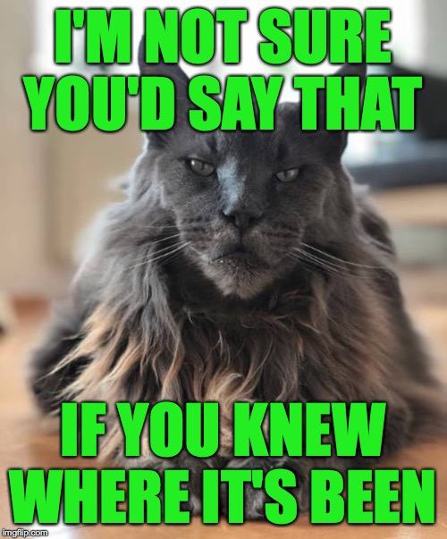 Wise Cat | I'M NOT SURE YOU'D SAY THAT IF YOU KNEW WHERE IT'S BEEN | image tagged in wise cat | made w/ Imgflip meme maker