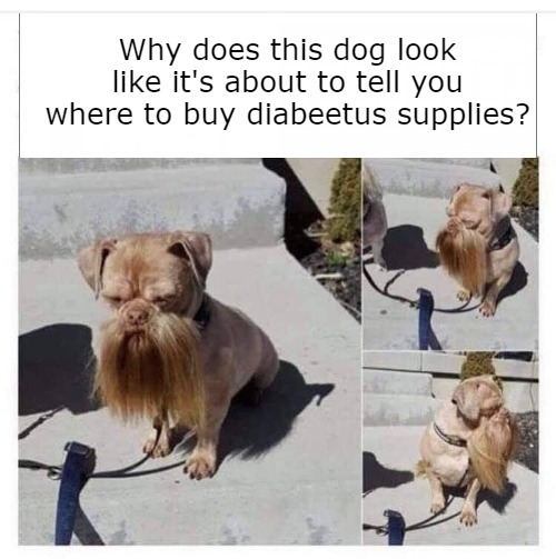 Why does this dog look like it's about to tell you where to buy diabeetus supplies? | image tagged in diabeetus,wilford brimley,medical humor,dark humor,commercials | made w/ Imgflip meme maker