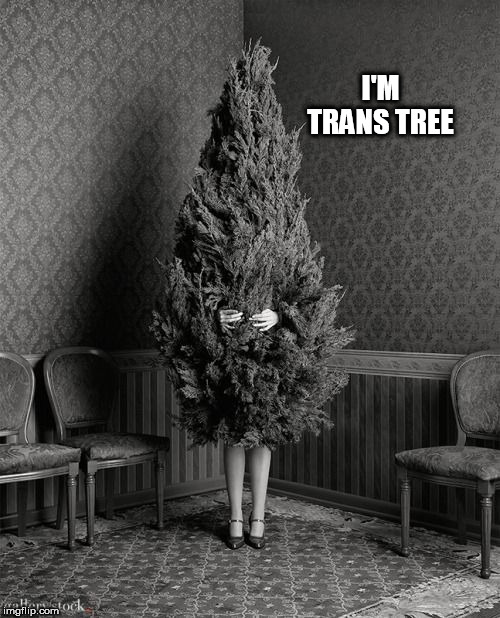 trans |  I'M TRANS TREE | image tagged in trans | made w/ Imgflip meme maker